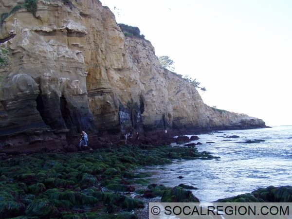 View of the caves, at low tide (-1.8 feet) in January 2008. The area in green at the bottom is usually well under water.