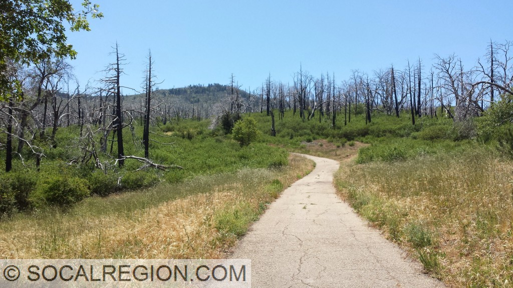 Looking up the trail, many dead trees can be seen from the 2003 fires.