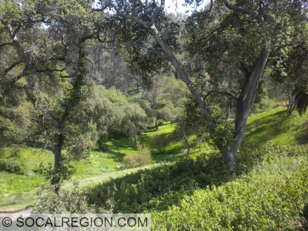 Balboa Park near Redwood Circle.