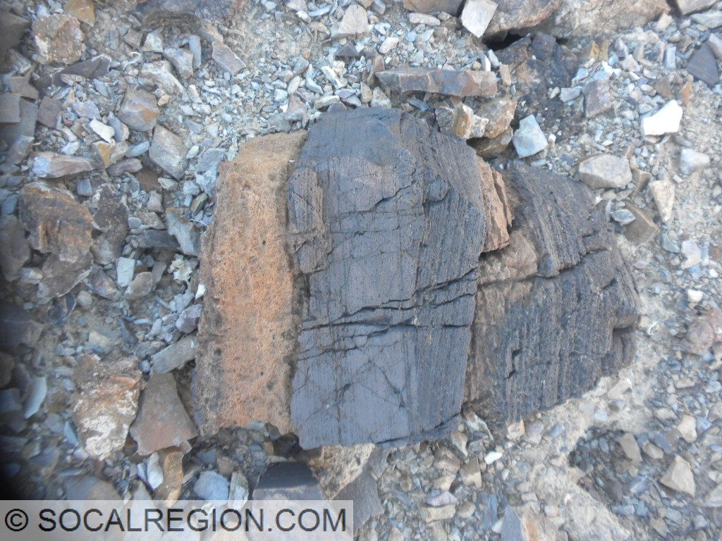 Crossbedding is visible in the darker layers within this rock.