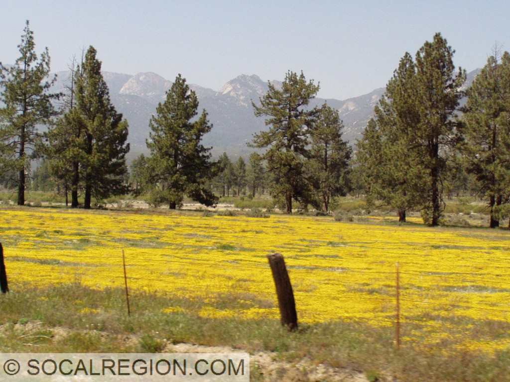 Springtime along 74 near Lake Hemet.